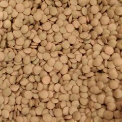 Lentils uncooked